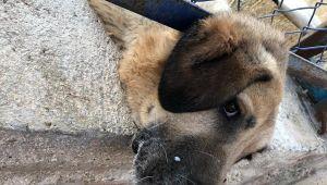 Ölmek Üzere Olan Köpeği İtfaiye Kurtardı