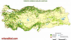 Türkiye'de Ormanlar Ve Ağaç Türleri