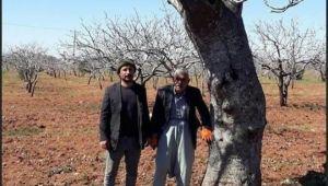 En Yaşlı Fıstık Ağacı Urfa'da Bulundu