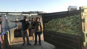 Fıstık Hasat Dönemi Başladı İşletme Tesisleri Yoğun Çalışıyor