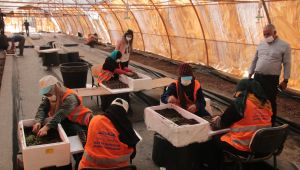 Asfalt, Beton, Kilitli Parke Taşı Derken Büyükşehir İlk Defa Kendi Çiçeğini Üretiyor