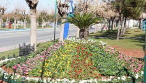 Doğanın Harika Renkleri, Eyyübiye'de Toprakla Buluşuyor