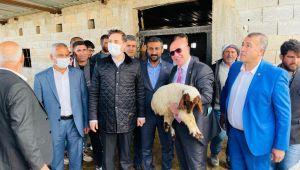 Gözaltındaki 35 Koyunu Meclis Kurtardı!