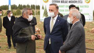 Osmanbey'de Bir Orman Oluşturuluyor