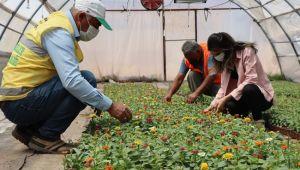 Yetiştirdiğimiz Çiçekler Park, Cadde Ve Refüjlerde Renk Cümbüşü Oluşturuyor