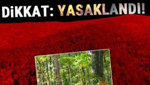 Orman Yangınlarının Önlenmesi Amacıyla Alınan Yasaklama Kararı